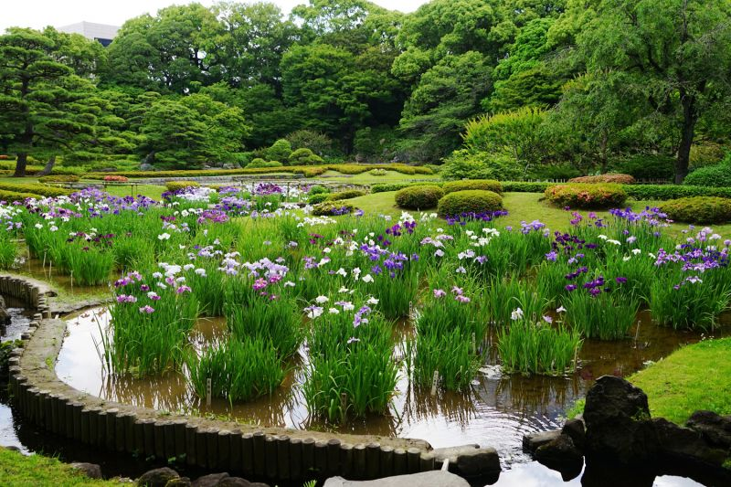 hoa diên vĩ, cẩm tú cầu ở Hoàng cung Tokyo