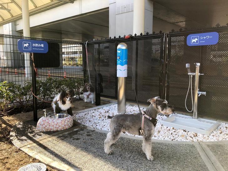 nhà vệ sinh dành cho cún ở sân bay Itami