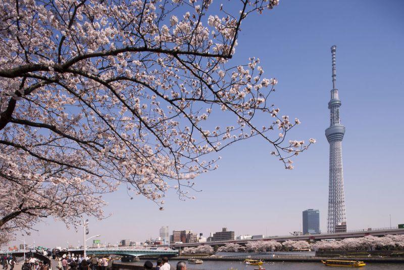 cập nhật tình hình covid-19 tại Nhật Bản