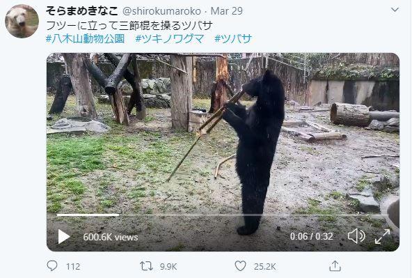 gấu tsubasa múa côn