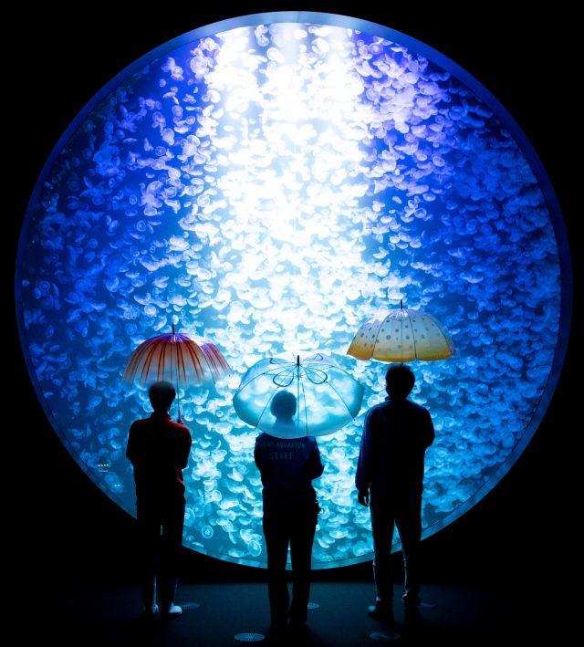 những chiếc ô hình sứa