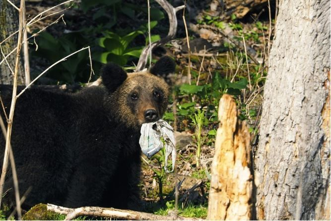 gấu con ngậm rác thải nhựa