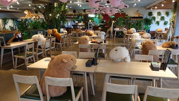 Một nhà hàng dùng thú bông để giữ khoảng cách an toàn cho khách