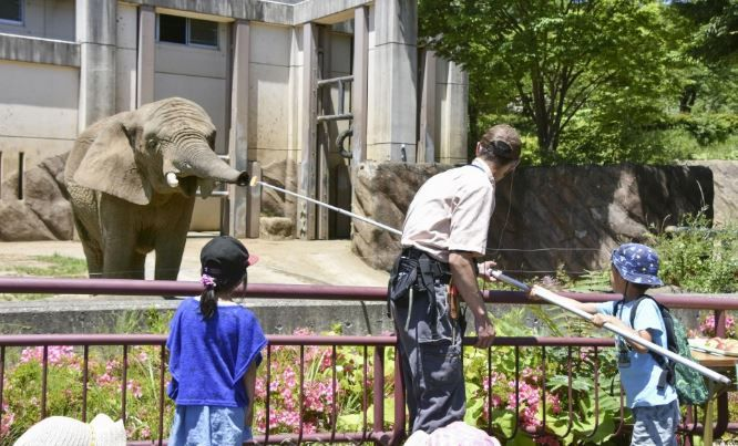 du khách cho voi ăn