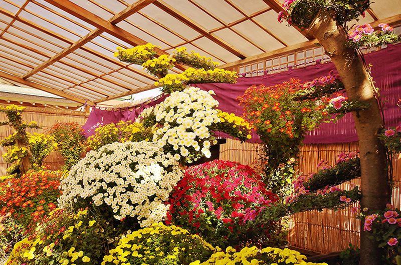 Choyo: lễ hội búp bê hoa cúc Nhật Bản