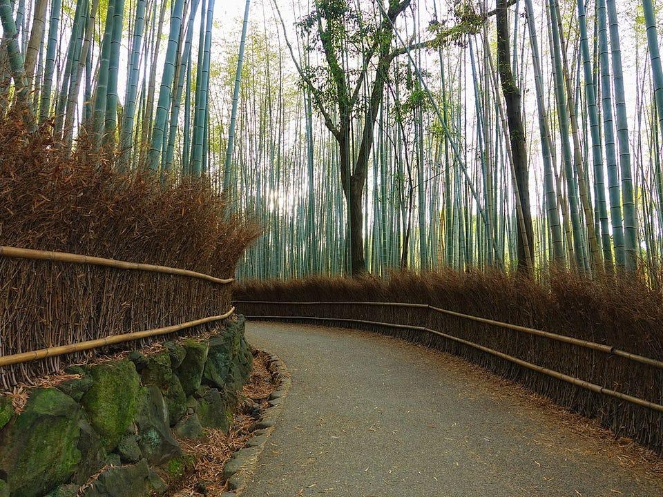 rừng tre Sagano ở ngoại ô Kyoto