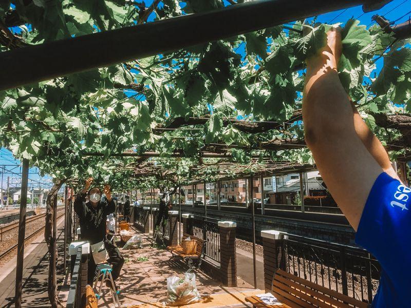 vườn nho tại nhà ga ở tỉnh Nagano