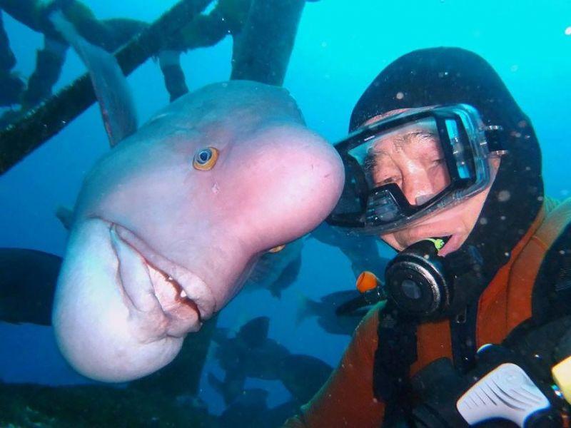 tình bạn giữa người thợ lặn và cô cá bàng chài
