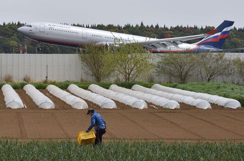 cánh đồng rau của lão nông ngay giữa sân bay Narita