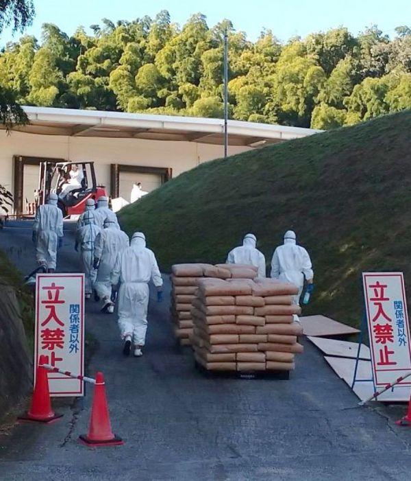 cúm gia cầm Nhật Bản