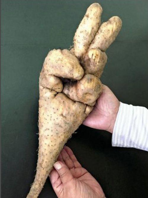 củ khoai tây độc đáo ở Nhật