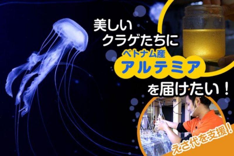 thủy cung sứa lớn nhất thế giới lao đao vì Covid-19