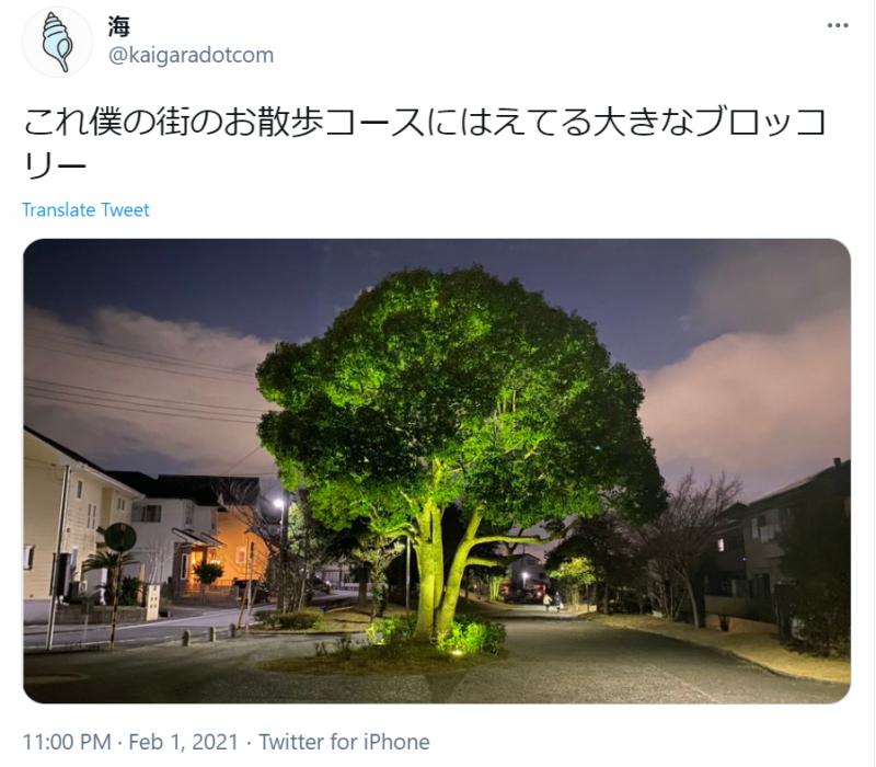 bông cải xanh khổng lồ mọc trên đường phố ở Nhật Bản