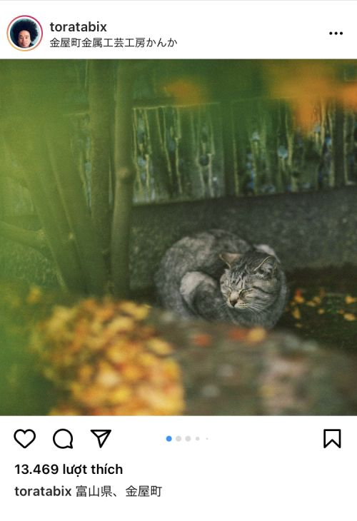 mê mẩn hình ảnh đầy thi vị của những chú mèo ở nông thôn Nhật Bản
