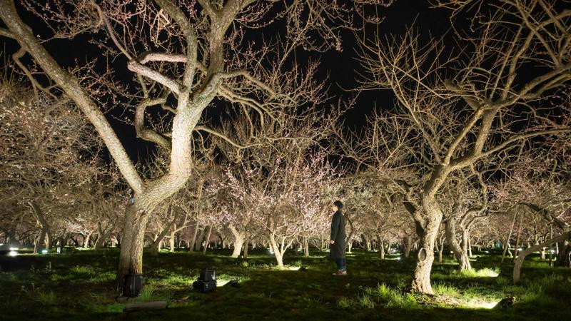 triển lãm vườn đêm của teamLab tại công viên Kairakuen