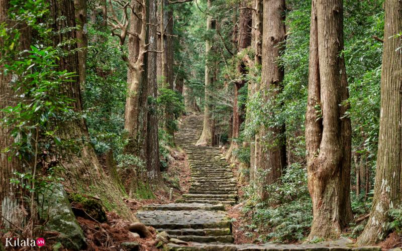 kumano kodo di sản văn hóa linh thiêng trên núi Kii