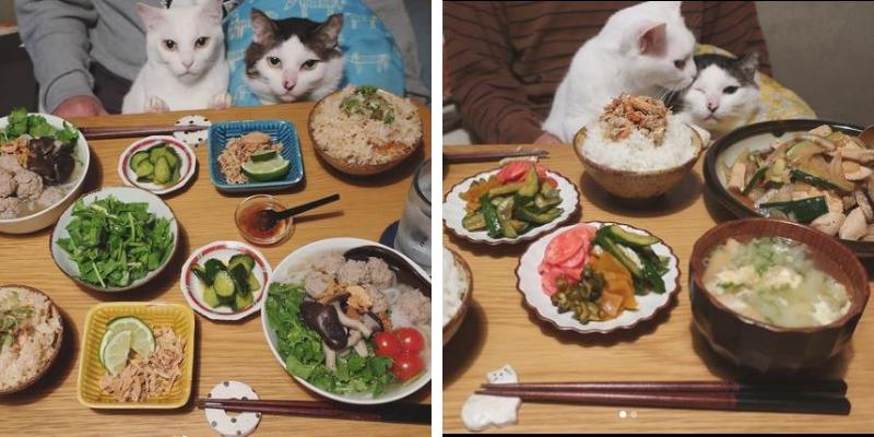 thú vị bộ ảnh mèo trên bàn ăn của cặp đôi người Nhật