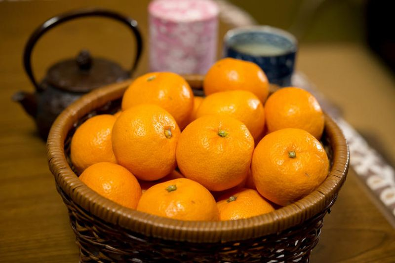 mikan ở vùng kyushu một mảnh lịch sử đầy ngọt ngào