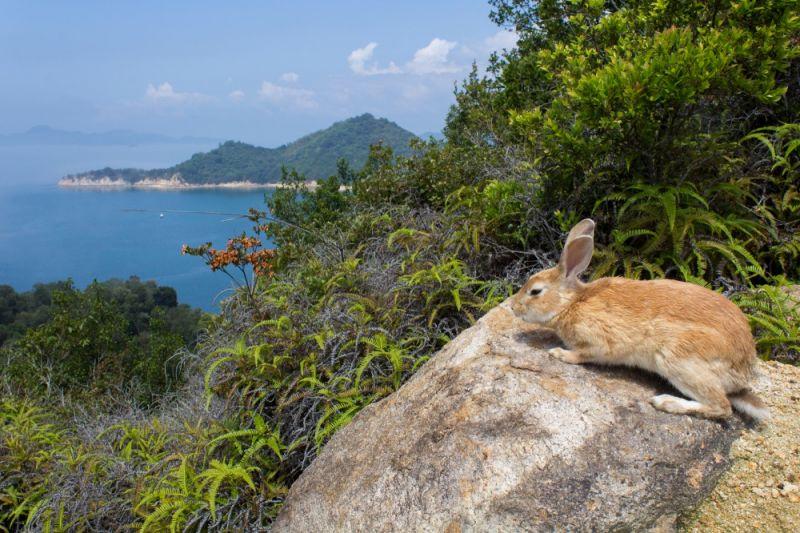 quá khứ u tối của đảo thỏ okunoshima