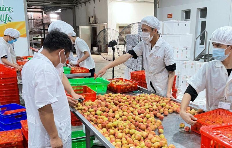 Nhật Bản ủy quyền cho Việt Nam giám sát khử khuẩn vải thiều