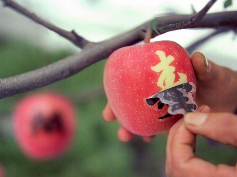 mojie ringo nghệ thuật vẽ hình lên trái táo