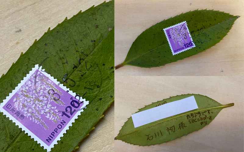 những tấm bưu thiếp bằng lá cây của người Nhật